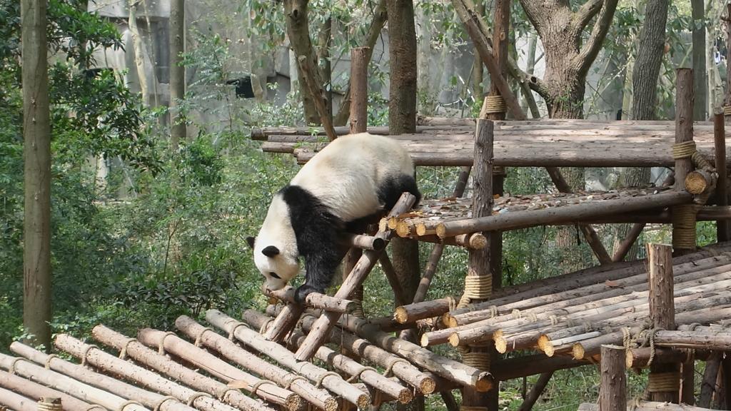 f:id:panda-25:20170410023504j:plain
