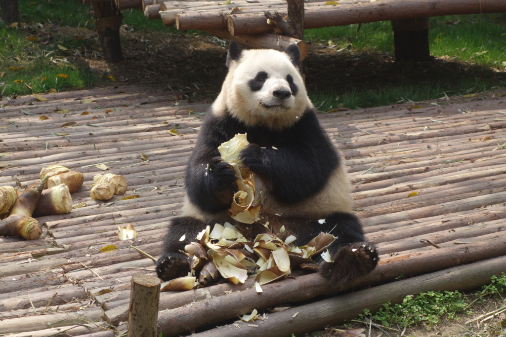 f:id:panda-25:20170410023805j:plain