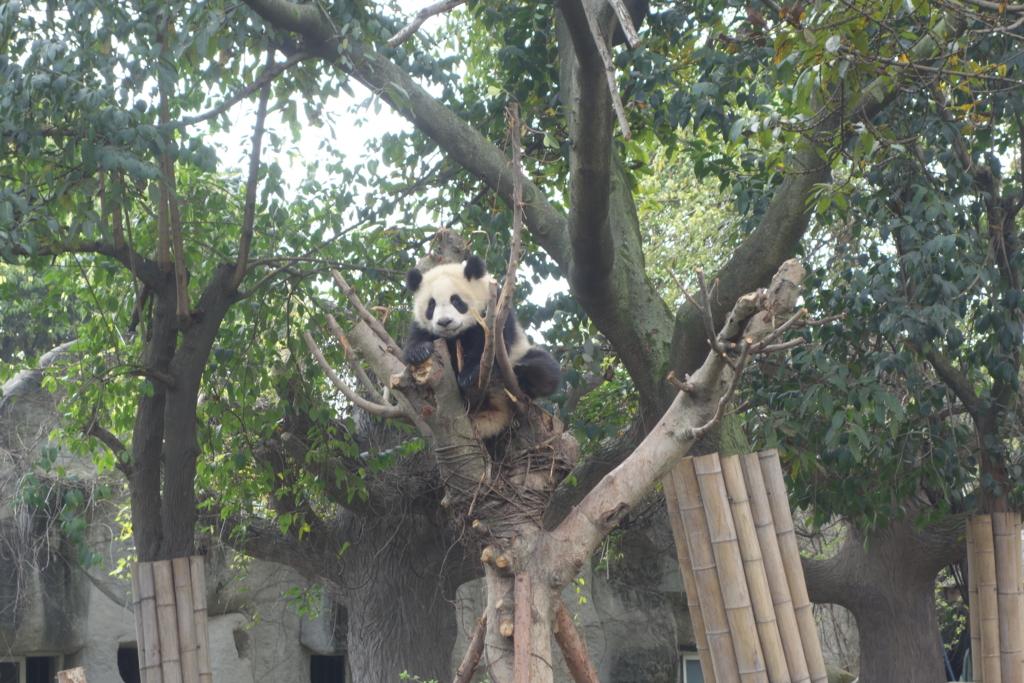 f:id:panda-25:20170410023957j:plain