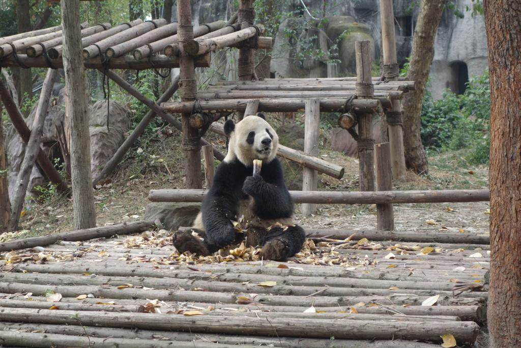 f:id:panda-25:20170410024258j:plain