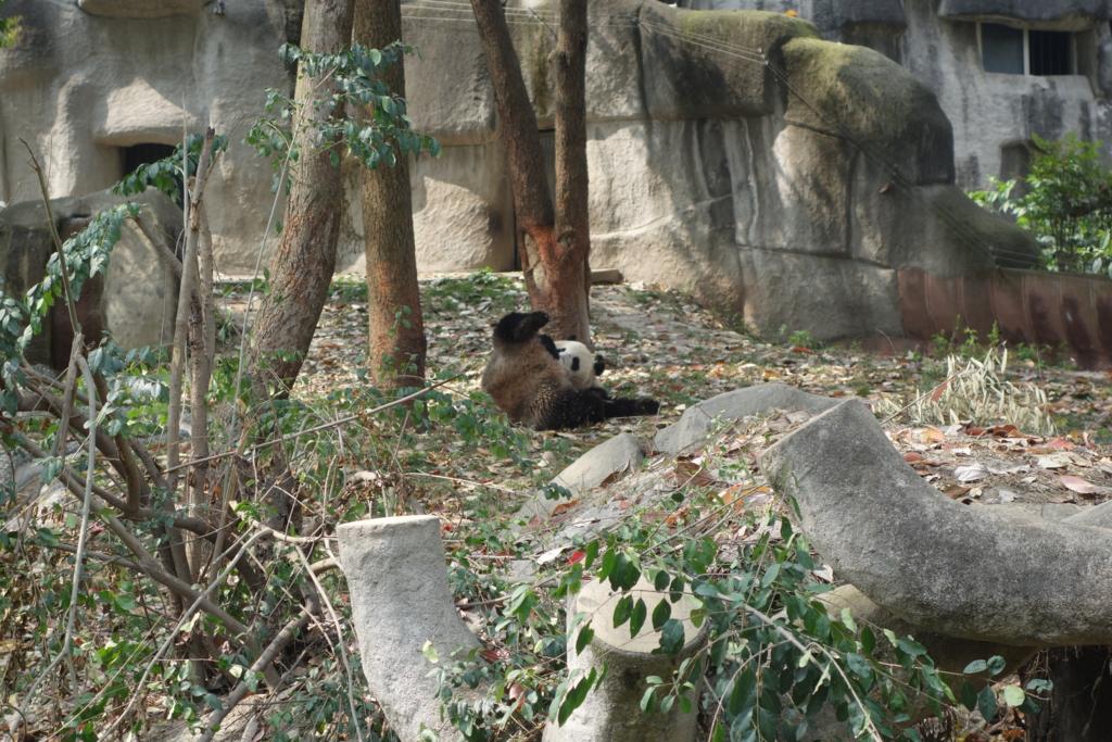 f:id:panda-25:20170410024747j:plain