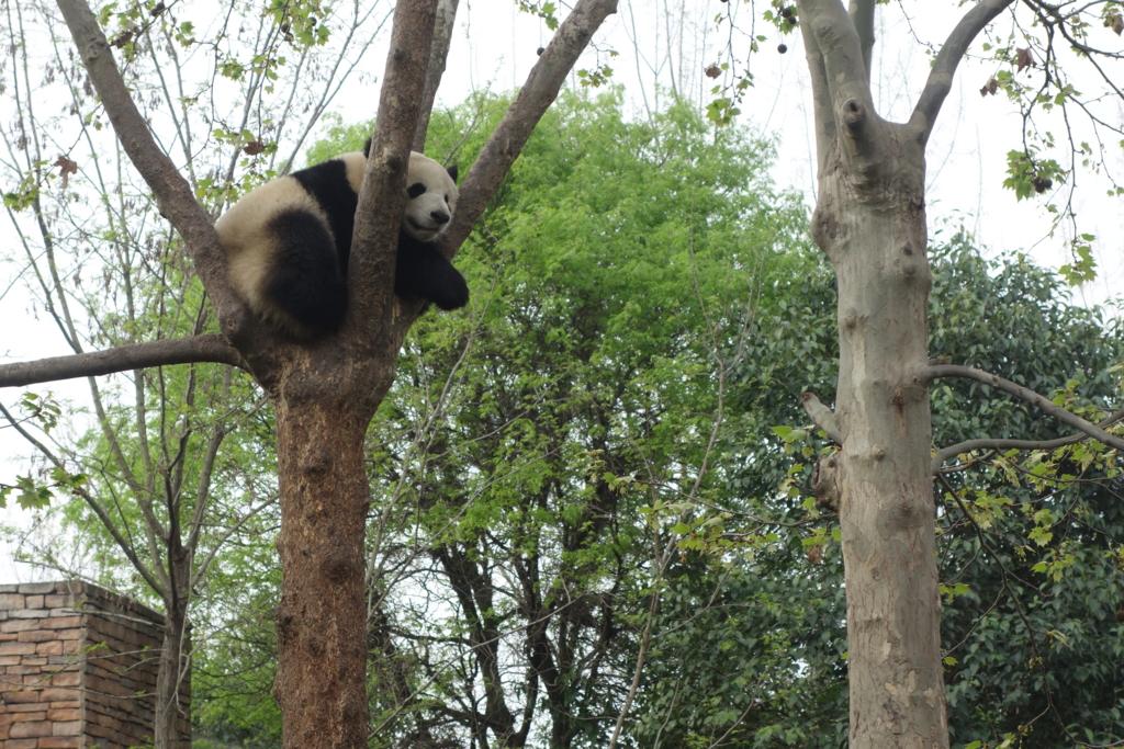 f:id:panda-25:20170410024951j:plain