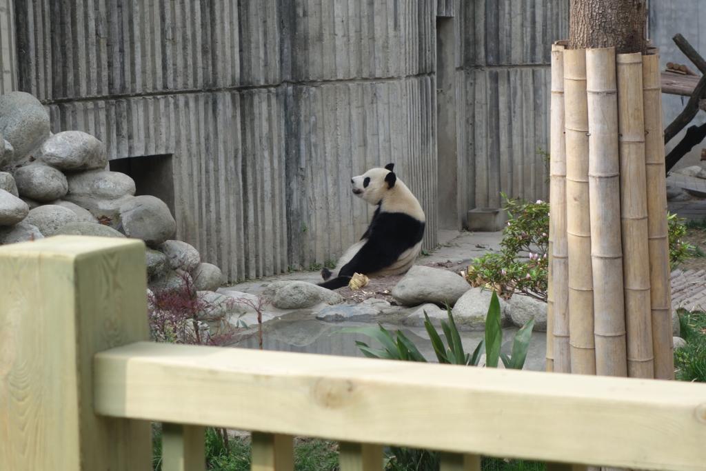 f:id:panda-25:20170410025137j:plain