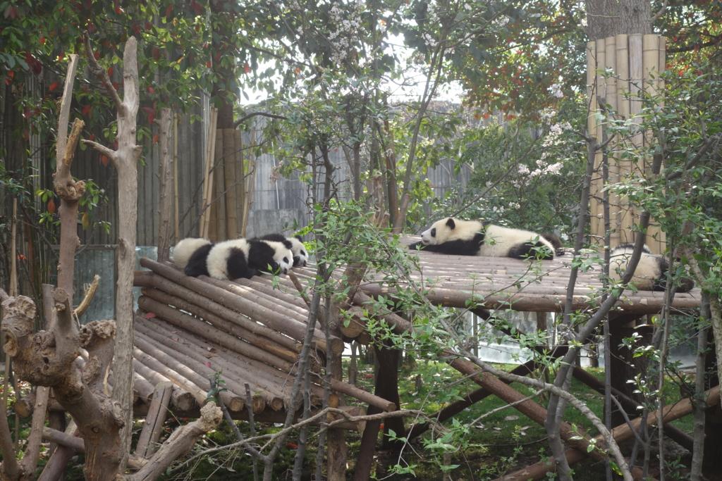f:id:panda-25:20170410025310j:plain