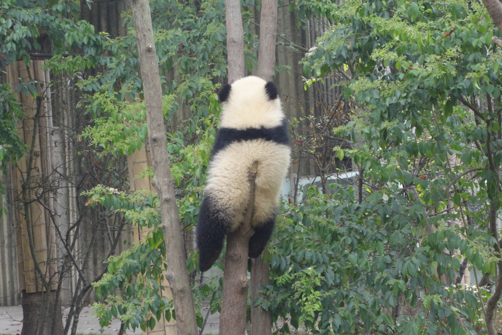 f:id:panda-25:20170410025411j:plain