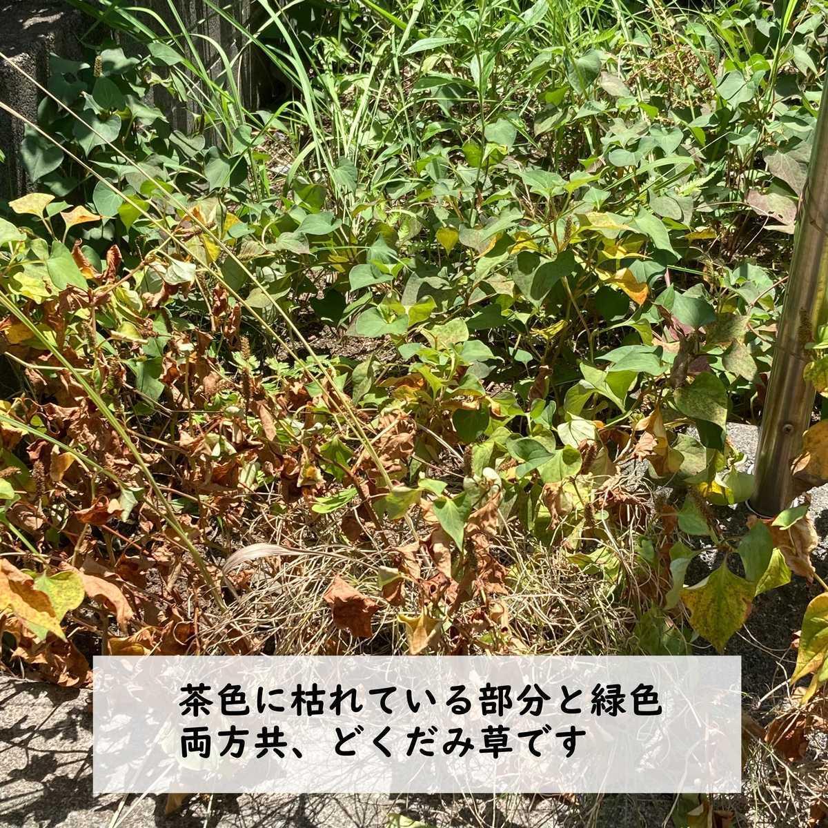 f:id:panda7853:20210729124012j:plain