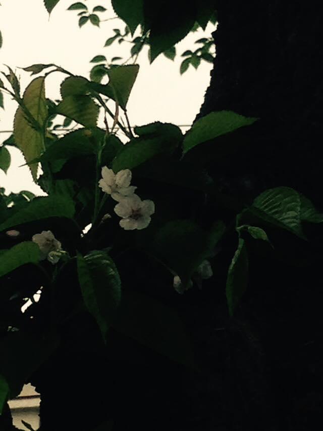 f:id:pandashu:20160427144455j:plain