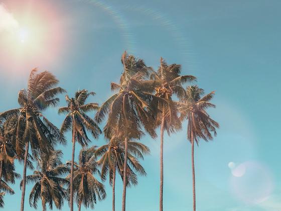 2020年の夏が暑くなるのか?気温、気候、天気、について調べました。