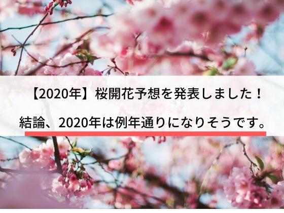 2020年桜開花予想、花見や旅行に向けて開花予想をどうぞ。