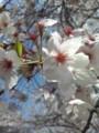 柴島浄水場の桜が綺麗♪