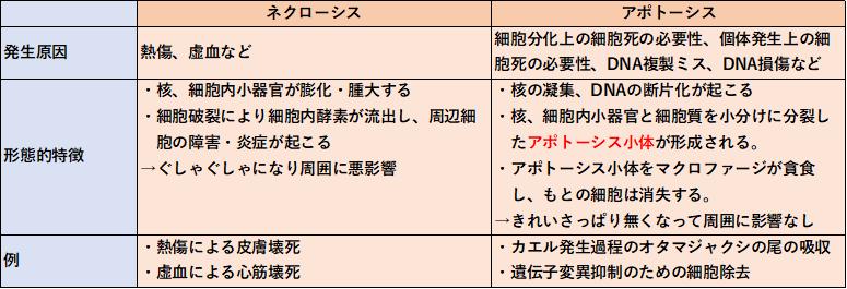f:id:papayaku:20200426183506p:plain