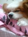 ベロ出して寝てる