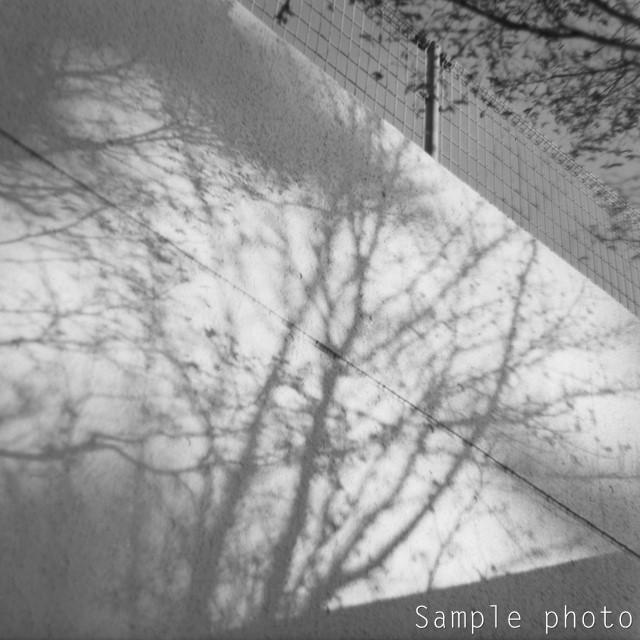 f:id:papiocamera:20191203150812j:plain