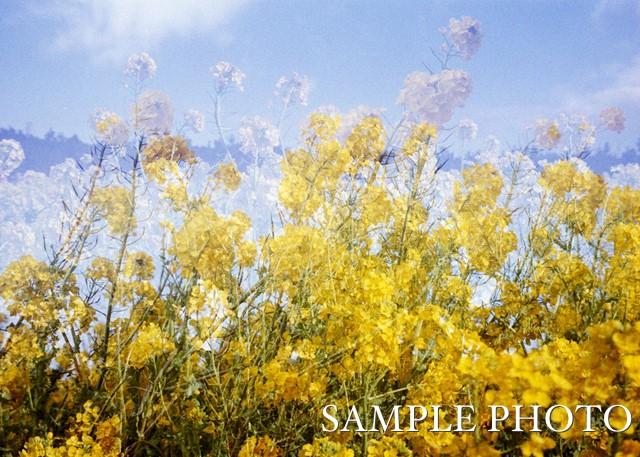 f:id:papiocamera:20200315111459j:plain