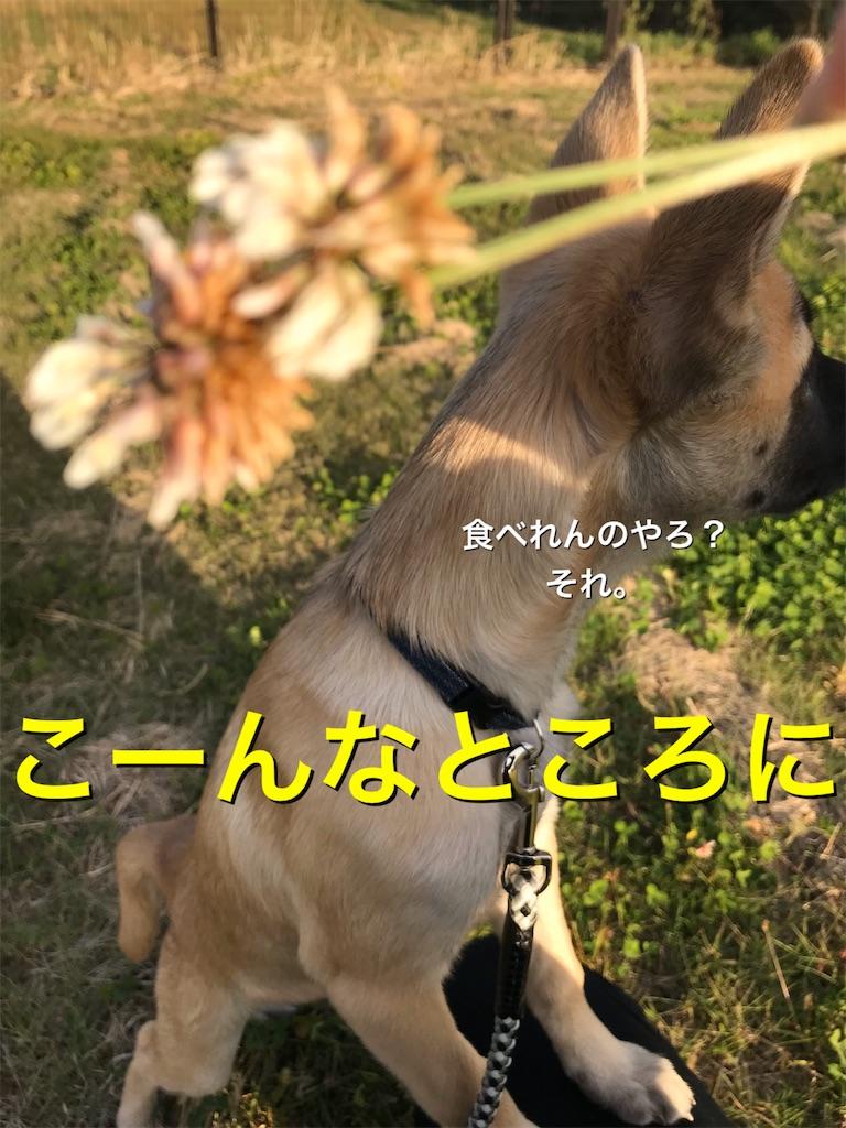 f:id:papurikax:20200112115220j:image