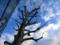 カメラテストパターンの樹