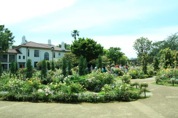 港の見える丘公園のイングリッシュローズガーデン