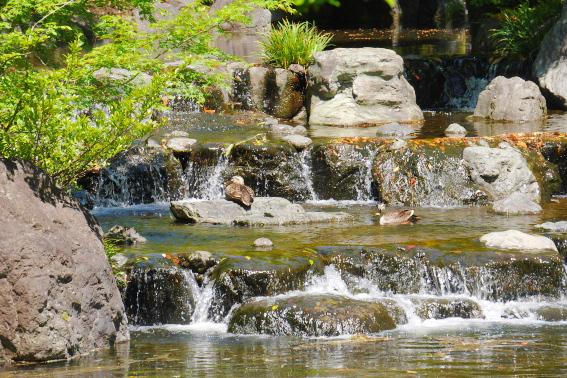 寒川神社の神嶽山の杜