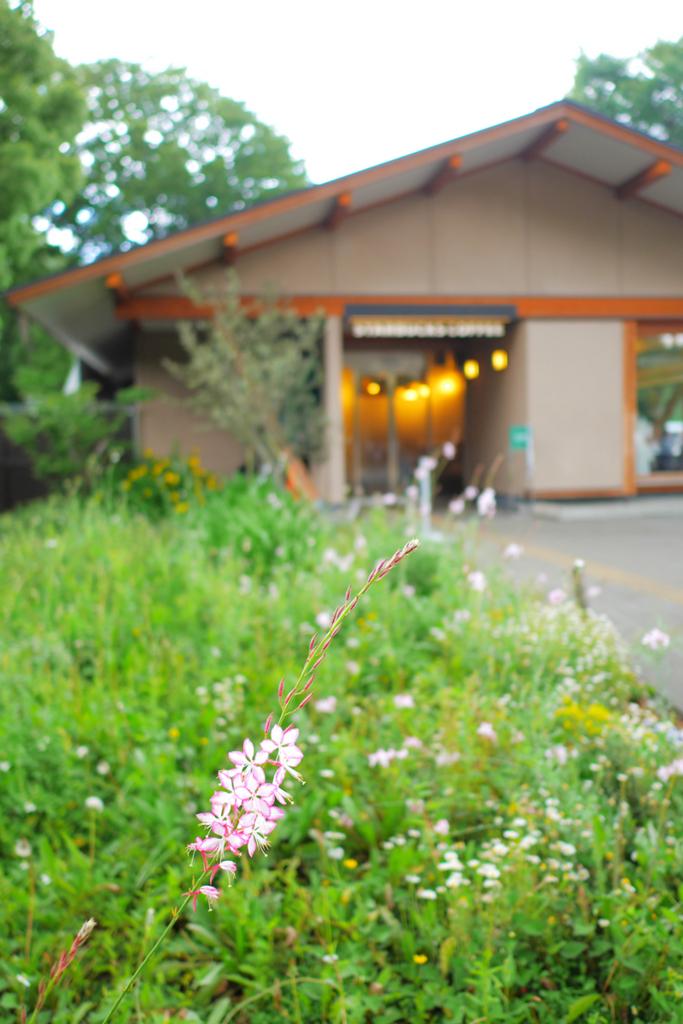 上野公演のスターバックスの近くに咲いていた花の写真