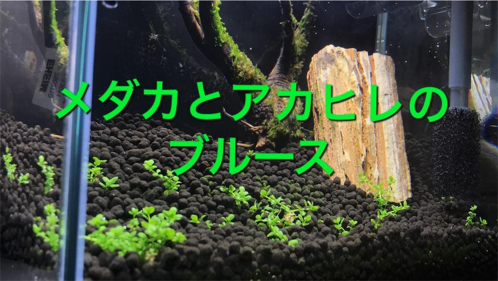 f:id:para-aqua:20180927114008j:image