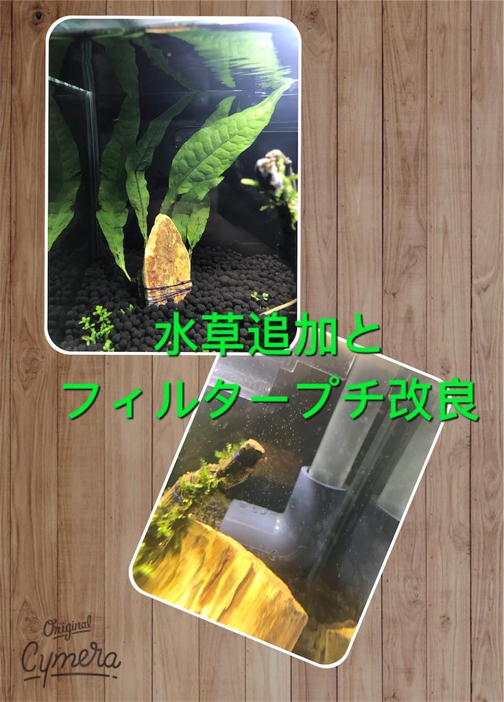 f:id:para-aqua:20181001124051j:image