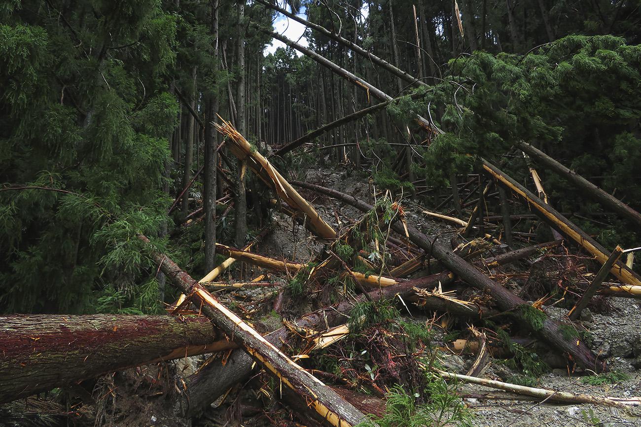 破断した杉が土砂崩れの凄まじい力を物語る