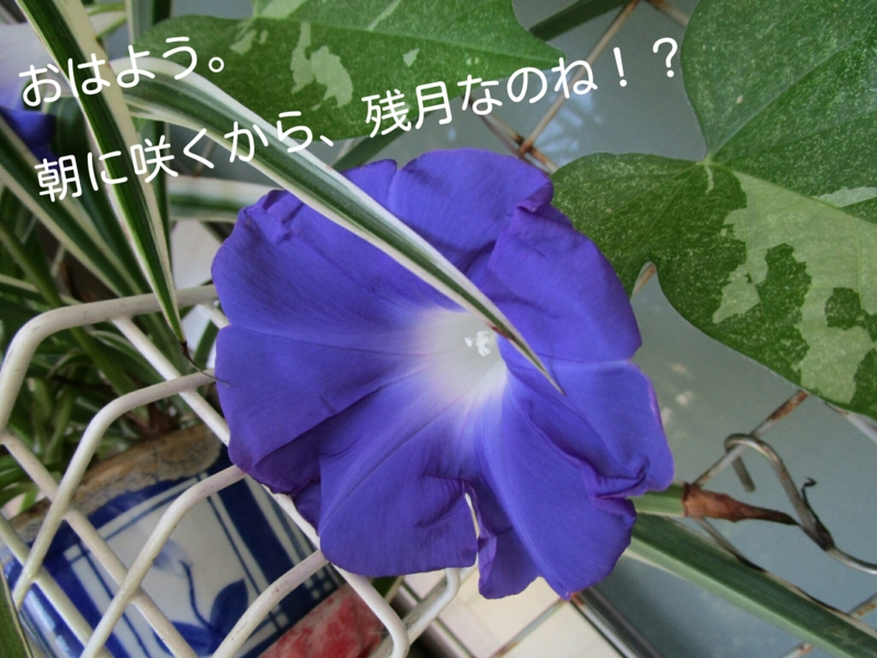 f:id:param0609:20160828140250j:plain