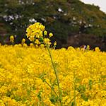 f:id:parasol:20130326234742p:image:left