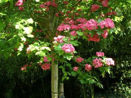 ジベ赤い花.jpg
