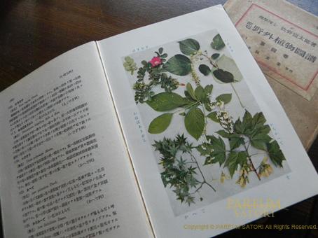 110624牧野図鑑.jpg