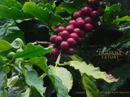 130407コーヒー豆.jpg
