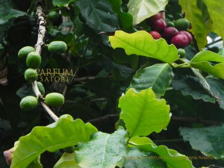 130407コーヒー豆2.jpg