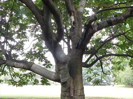 161006朴の木.jpg