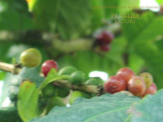 180120アラビアコーヒー.jpg