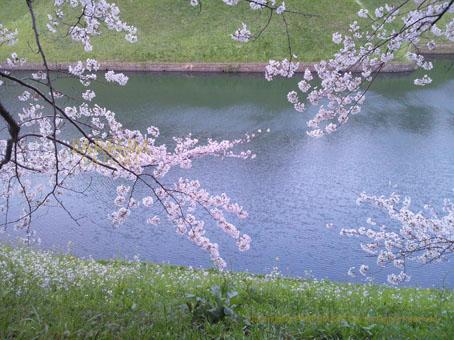 20120408半蔵門.jpg