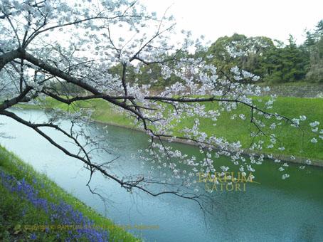 20120408半蔵門2.jpg