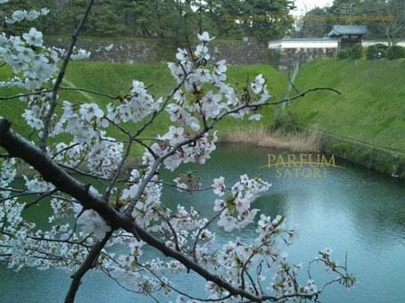 20120408半蔵門4.jpg
