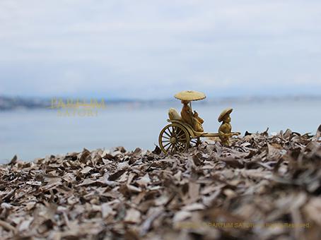 20160604島海藻3与一.jpg