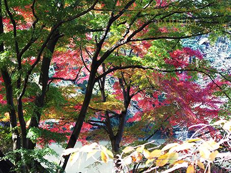 20161125紅葉3.jpg