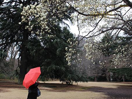20170315赤い傘.jpg