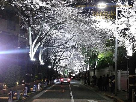 20170408スペイン坂桜2.jpg