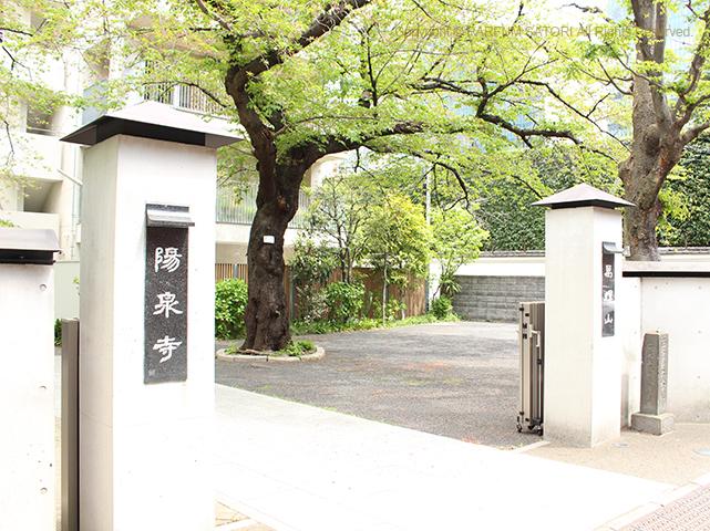 20180409枝垂桜お寺.jpg