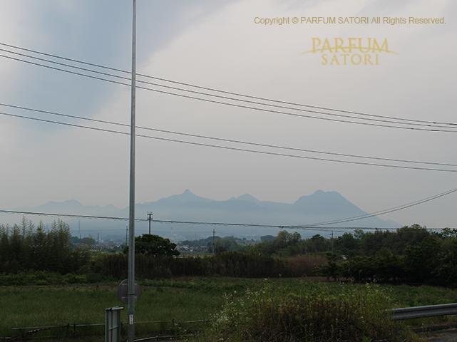 20180513赤城山ミズナラ11.jpg