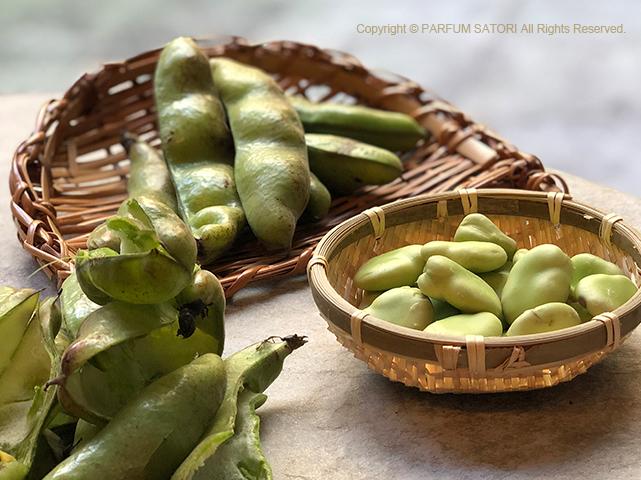 そら豆,ソラマメ,豆,天豆,