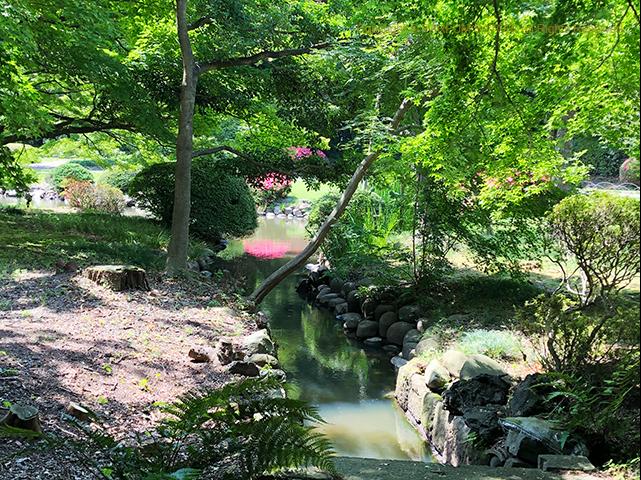 新宿御苑,日本庭園,