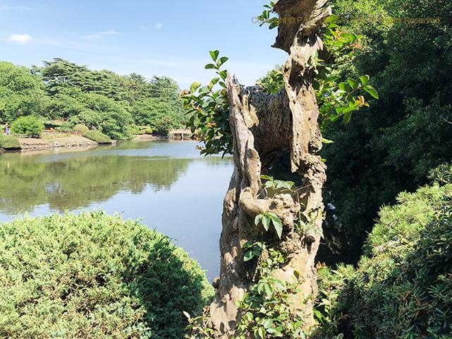 新宿御苑,中の池,