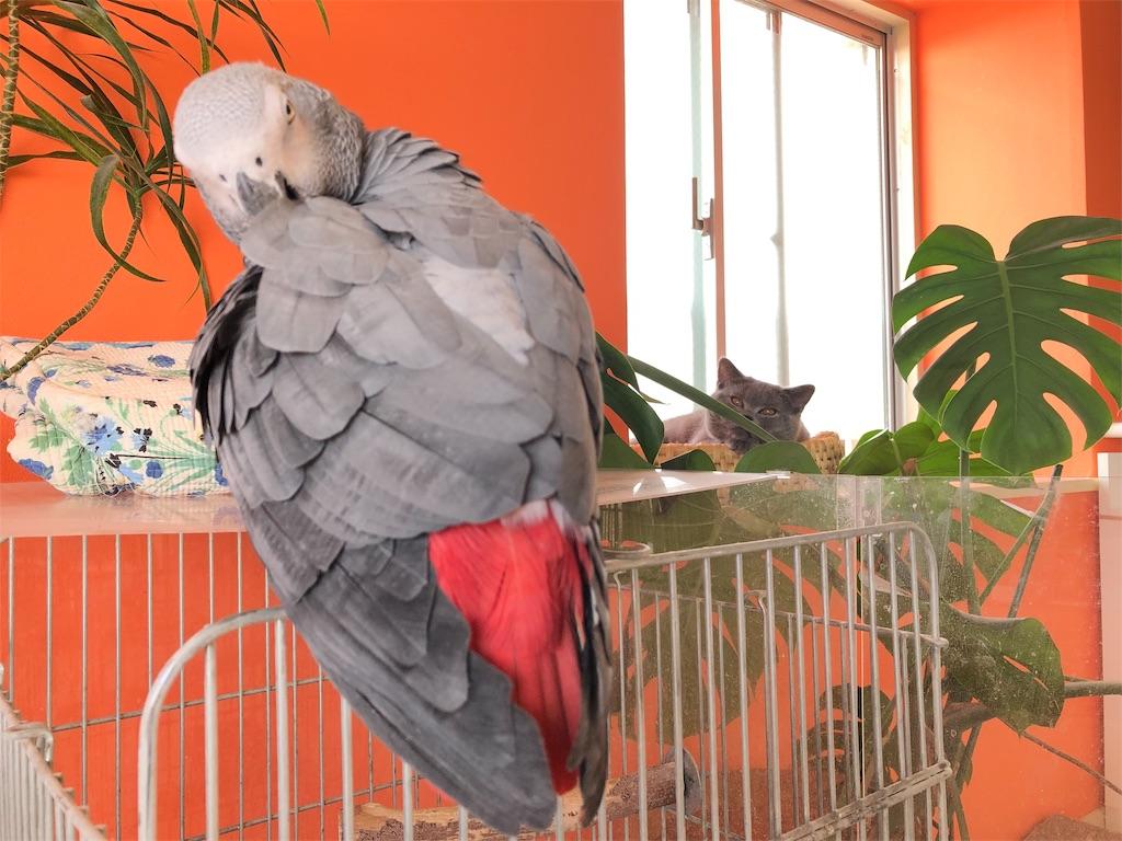 f:id:parrot624:20190515135605j:image