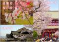 日本の春のスライド