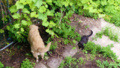 地下の犬シープと1階の猫パブロフ