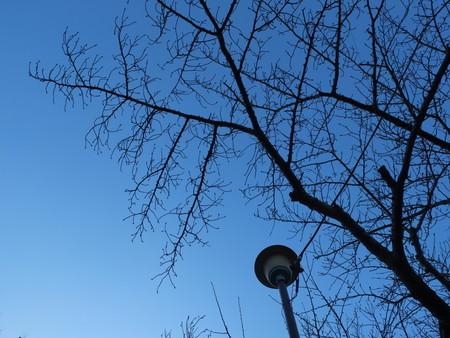 桜 2020年1月8日